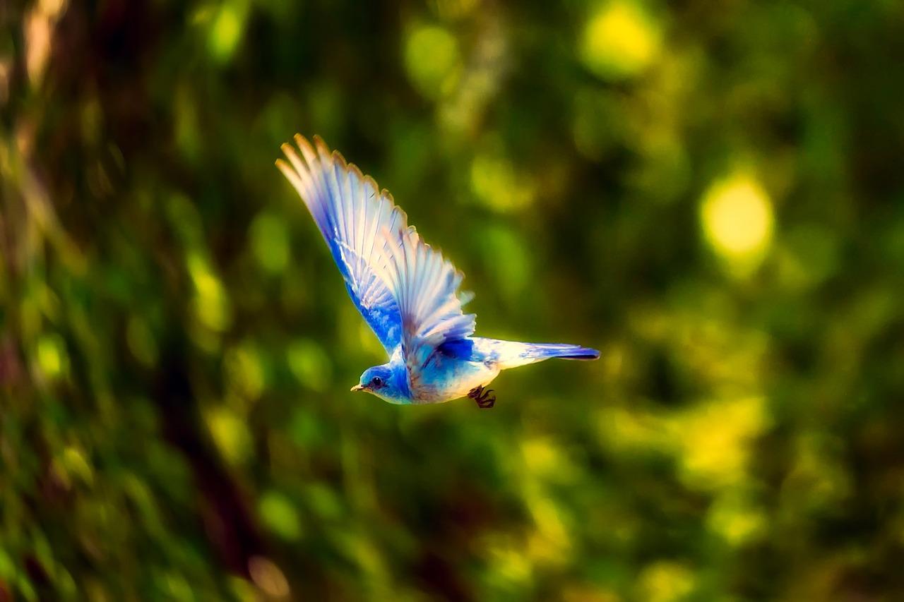 【映画ユーフォニアムの番外編】リズと青い鳥のネタバレをしてみた