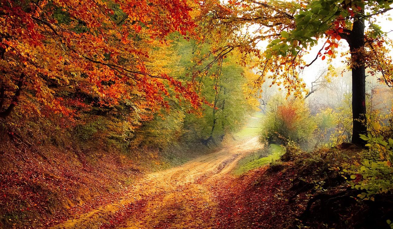【聖地巡礼旅行第九弾!】行くなら絶対に秋がオススメ!栃木県が聖地になったアニメ8選